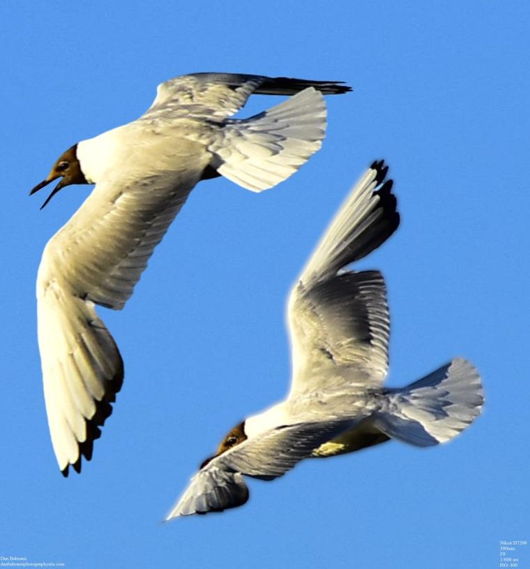 Birds 2 apart_SMALL_POSTEN 1_FOR WEB